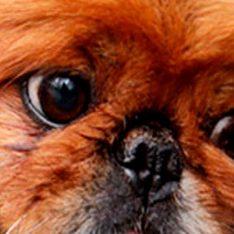 2fotos-libres-cachorros