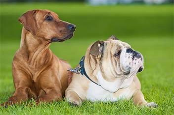 La Escuela Canina Fogaus es el único centro titulado en Etología Clínica de Centro América