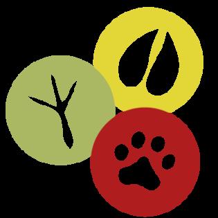 solo-logo-color-trans2